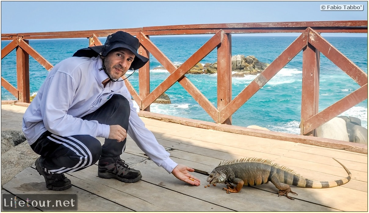 Fabio_s-LifeTour---Colombia-(2015-January-February)---Santa-Marta---Tayrona-park---Feeding-iguanas---8104
