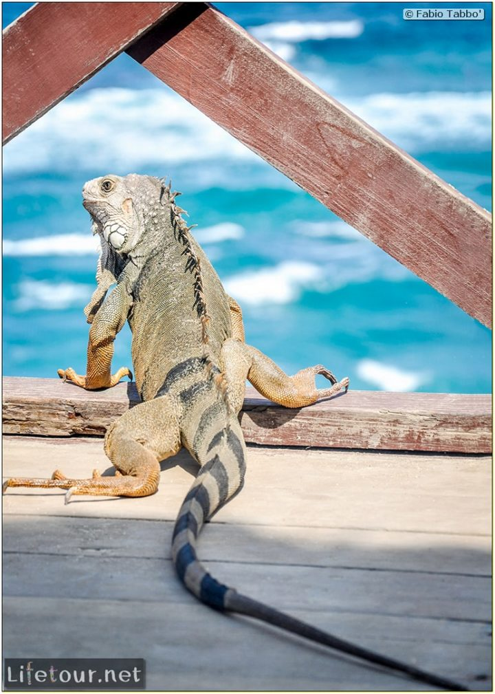 Fabio_s-LifeTour---Colombia-(2015-January-February)---Santa-Marta---Tayrona-park---Feeding-iguanas---8305