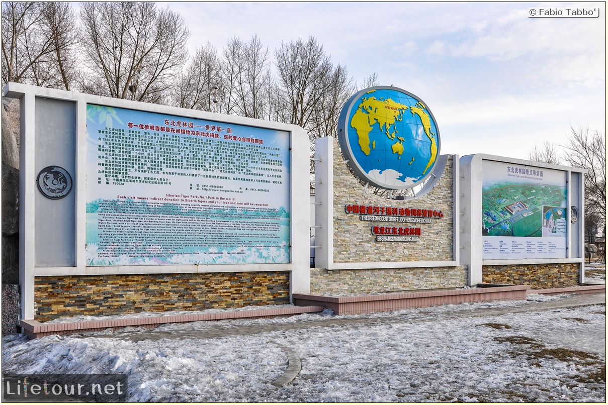 Fabio's LifeTour - China (1993-1997 and 2014) - Harbin (2014) - Siberian Tiger Park - 4910