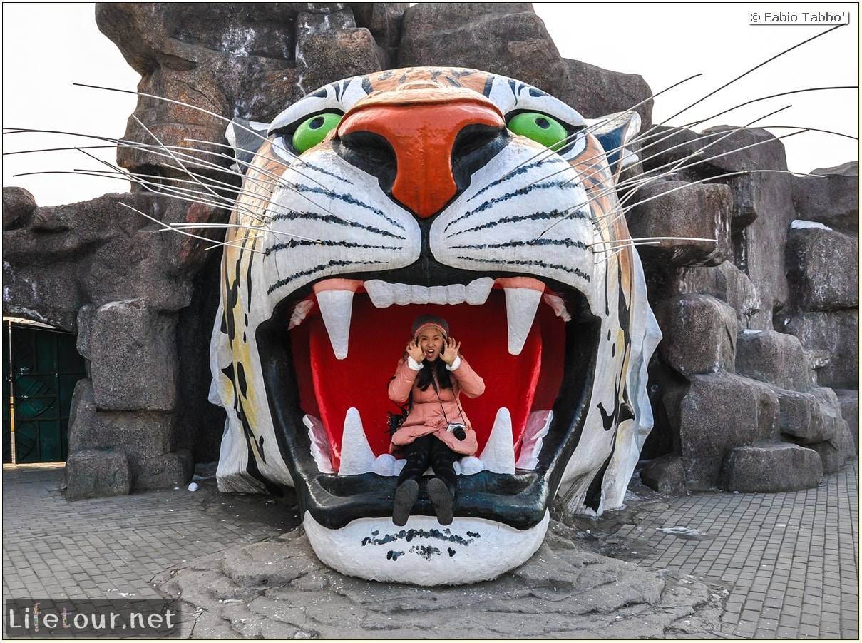 Fabio's LifeTour - China (1993-1997 and 2014) - Harbin (2014) - Siberian Tiger Park - 5124