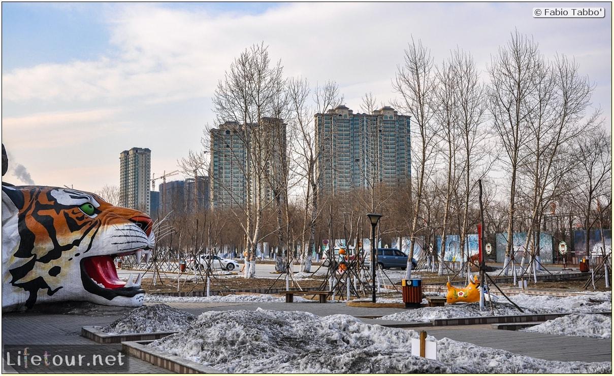 Fabio's LifeTour - China (1993-1997 and 2014) - Harbin (2014) - Siberian Tiger Park - 5532