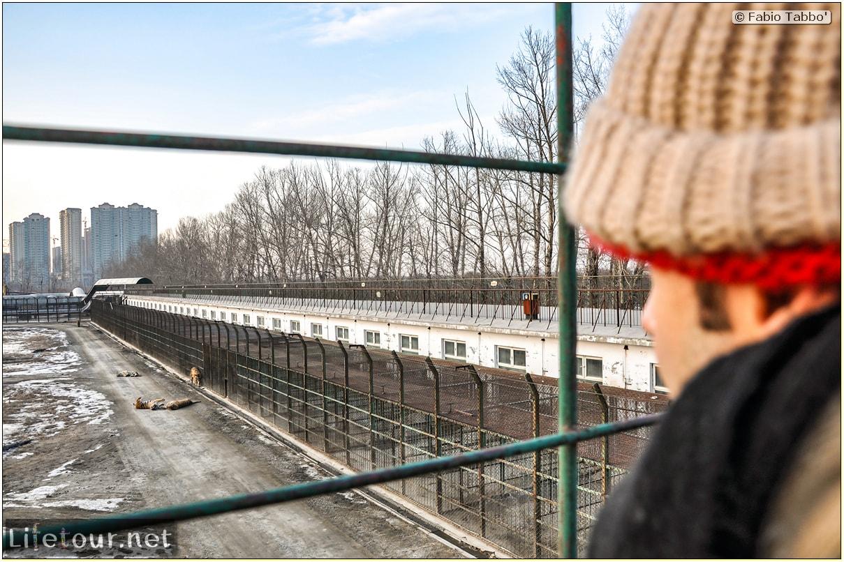 Fabio's LifeTour - China (1993-1997 and 2014) - Harbin (2014) - Siberian Tiger Park - 7584