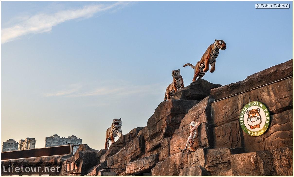 Fabio's LifeTour - China (1993-1997 and 2014) - Harbin (2014) - Siberian Tiger Park - 7967