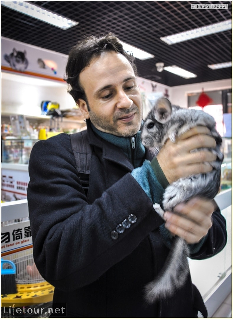 Tourism - Animal Market (2014) - Dragon cats and other fluffy marvels - 341
