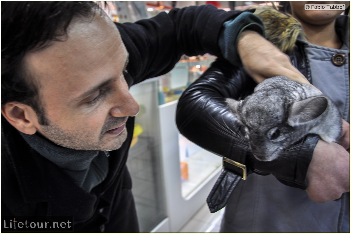 Tourism - Animal Market (2014) - Dragon cats and other fluffy marvels - 359