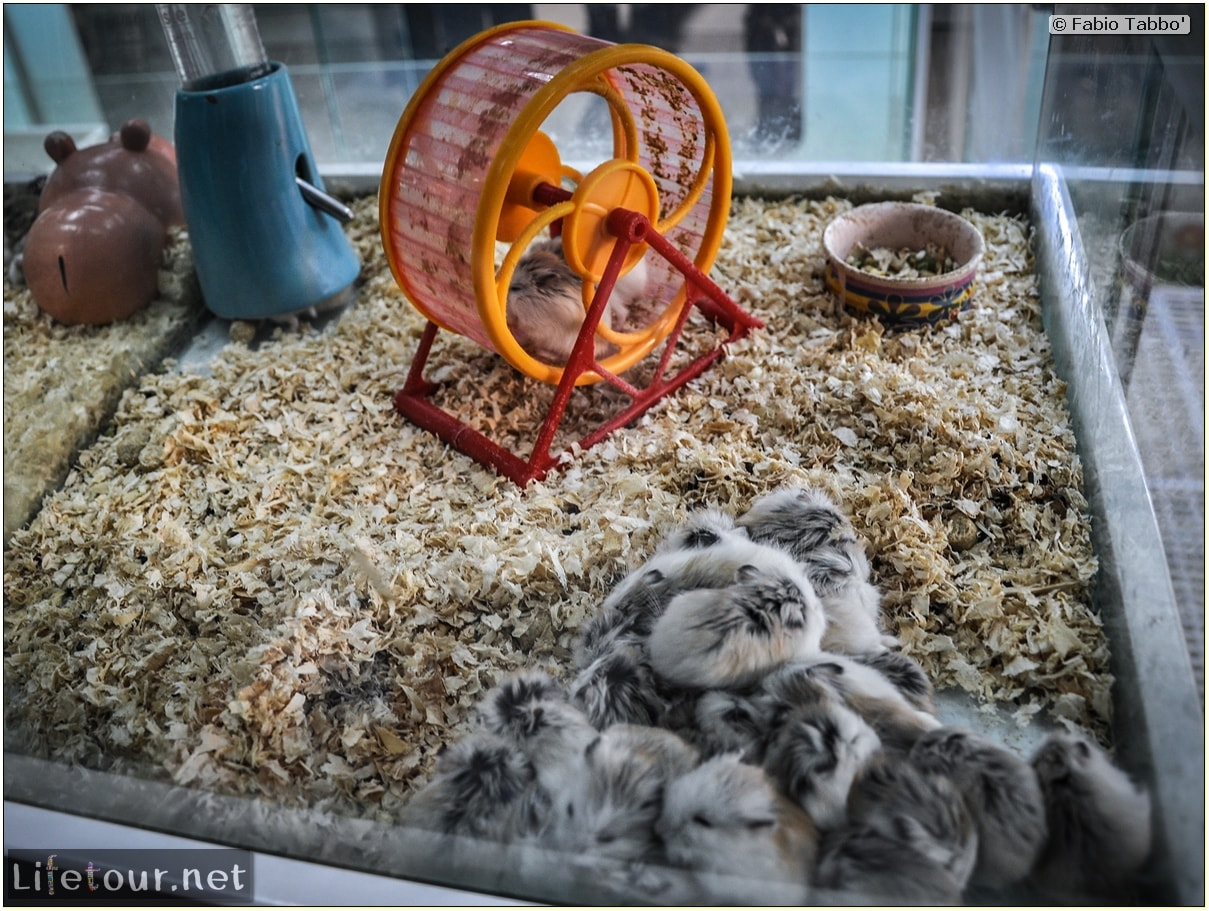 Tourism - Animal Market (2014) - Dragon cats and other fluffy marvels - 636