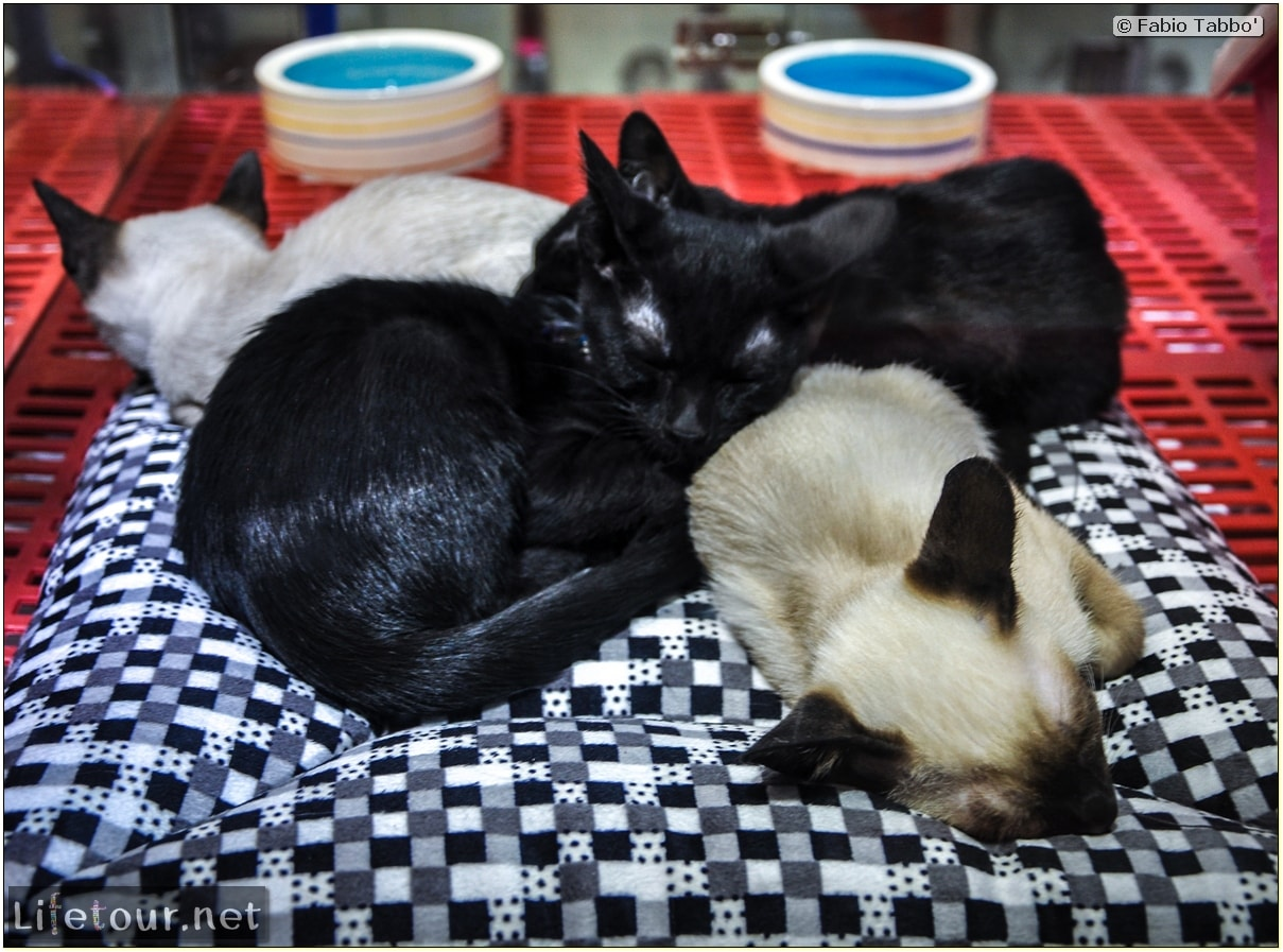 Tourism - Animal Market (2014) - Dragon cats and other fluffy marvels - 641