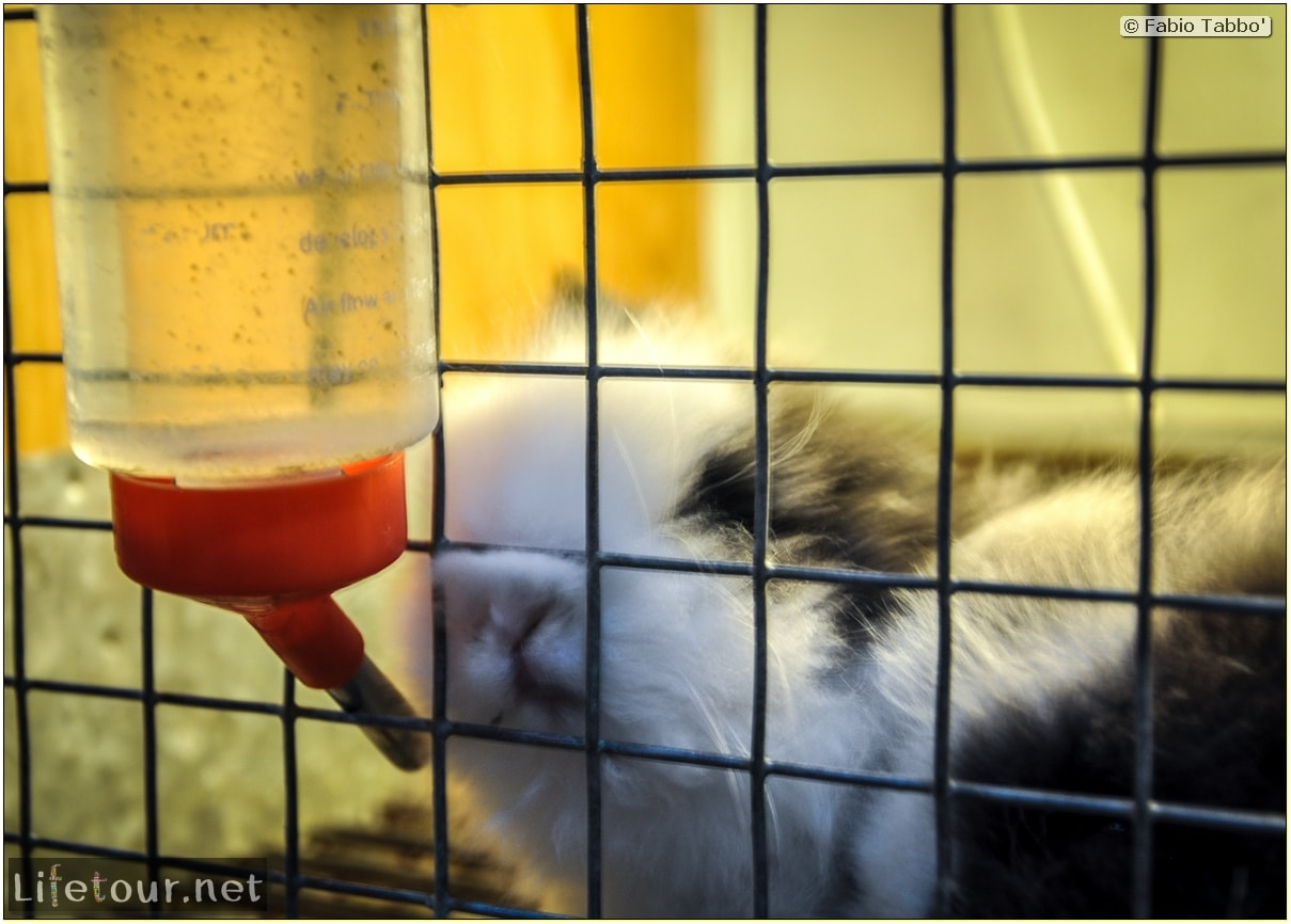 Tourism - Animal Market (2014) - Dragon cats and other fluffy marvels - 679