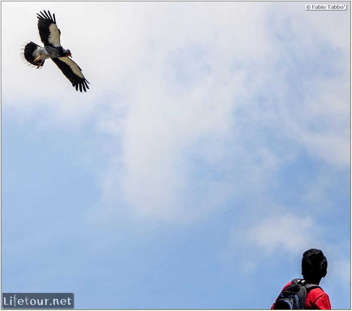 Fabio_s-LifeTour---Ecuador-(2015-February)---Quito---Teleferico---3--Condors---12244