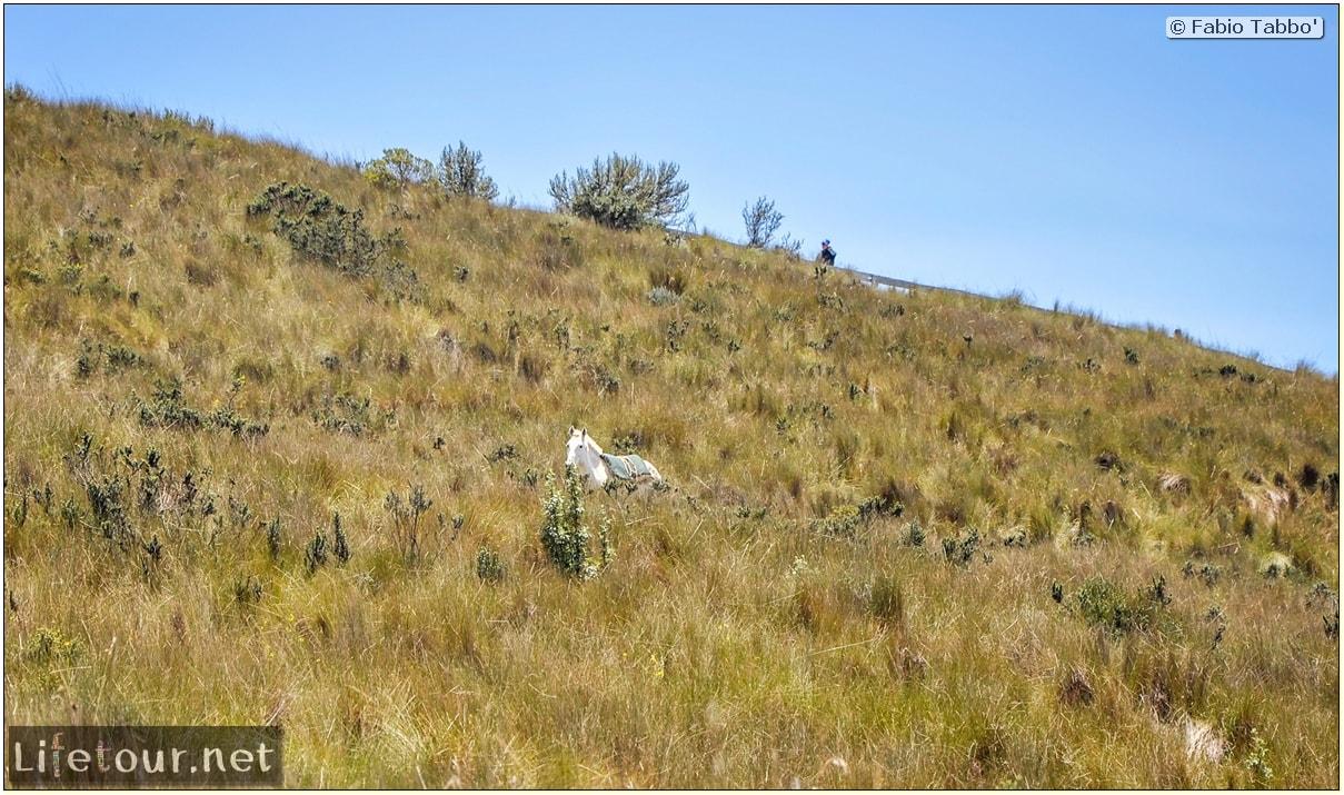 Fabio_s-LifeTour---Ecuador-(2015-February)---Quito---Teleferico---4--Trekking---12399