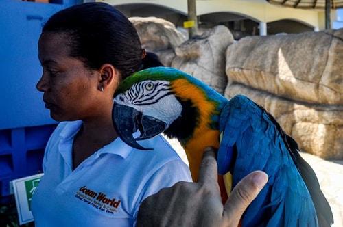Dominican-Republic-Puerto-Plata-Ocean-World-Birds-5280 COVER