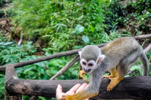 Dominican-Republic-Sosua-Monkey-Jungle-Monkey-Feeding-12061 COVER
