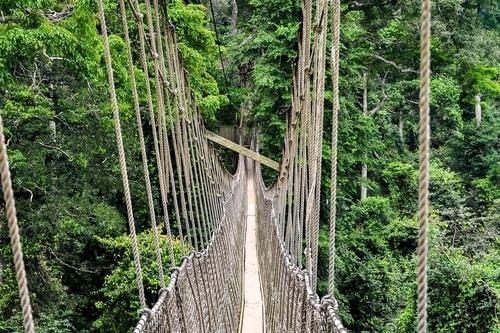 Ghana -Central Region-Kakum National Park-7244 COVER