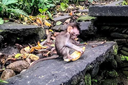 Indonesia-Bali-Ubud-Sacred-Monkey-Forest-Sanctuary-19303 COVER