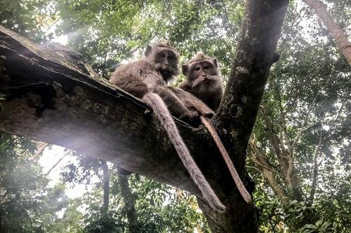 Indonesia-Bali-Ubud-Sacred-Monkey-Forest-Sanctuary-19329 COVER