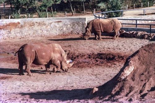 Maroc -Rabat-Rabat Zoo-17252 COVER