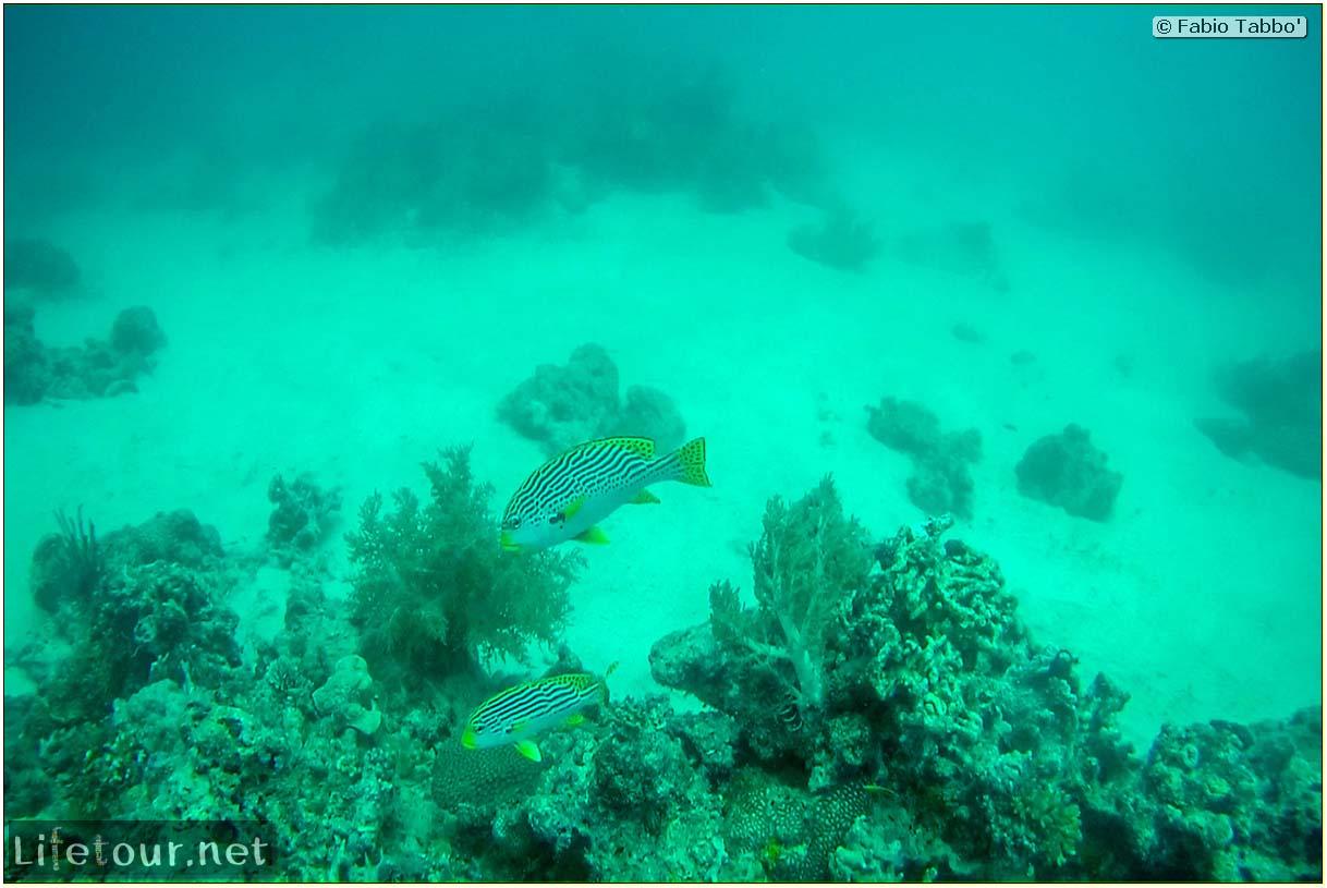 Oslob-Scuba-Diving-with-whale-sharks-Scuba-diving-with-whale-sharks-31