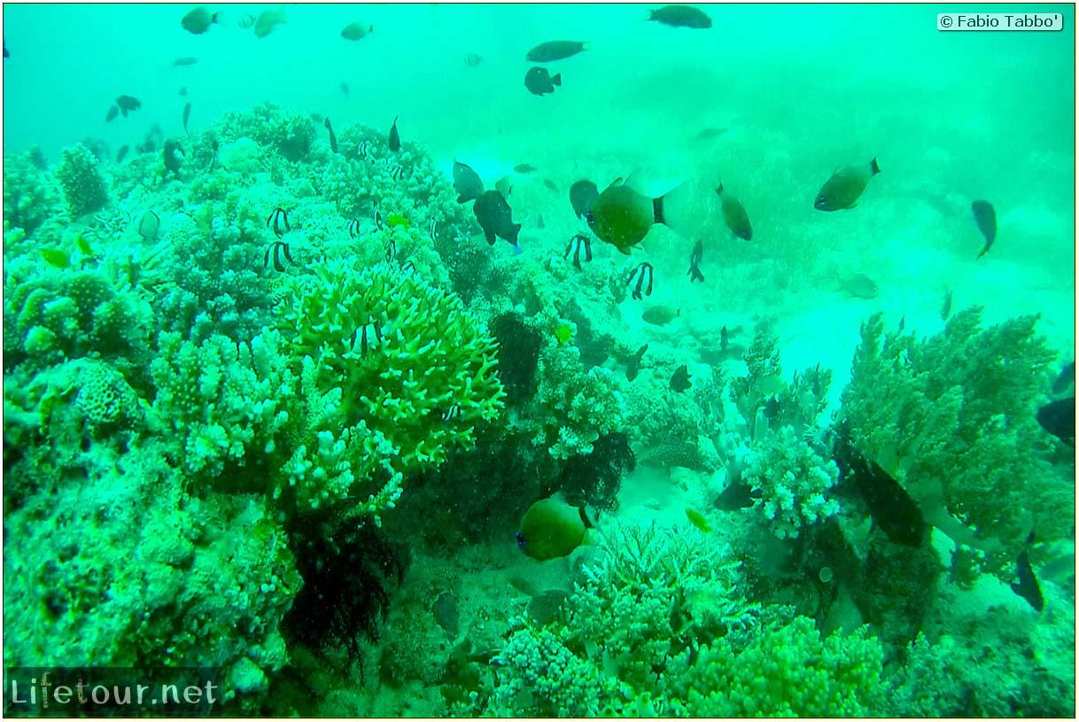Oslob-Scuba-Diving-with-whale-sharks-Scuba-diving-with-whale-sharks-46