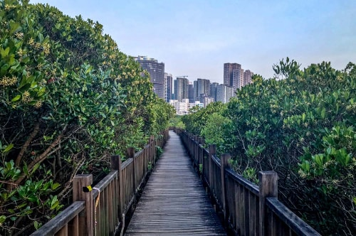 Taiwan 2018 July-October-New Taipei City-Hongshulin Mangrove Ecowalk-52 COVER