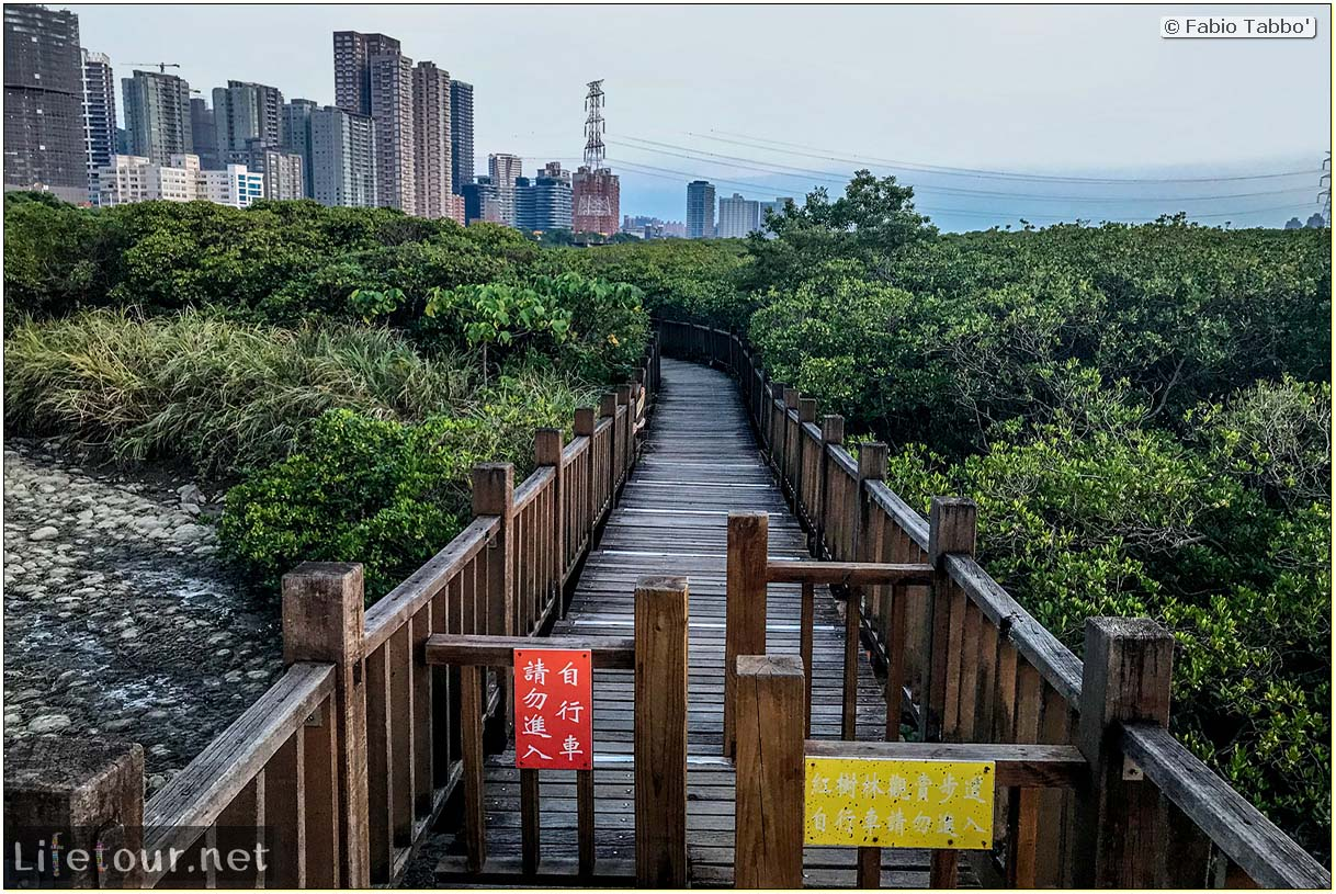 Taiwan 2018-New Taipei City-Hongshulin Mangrove Ecowalk-51
