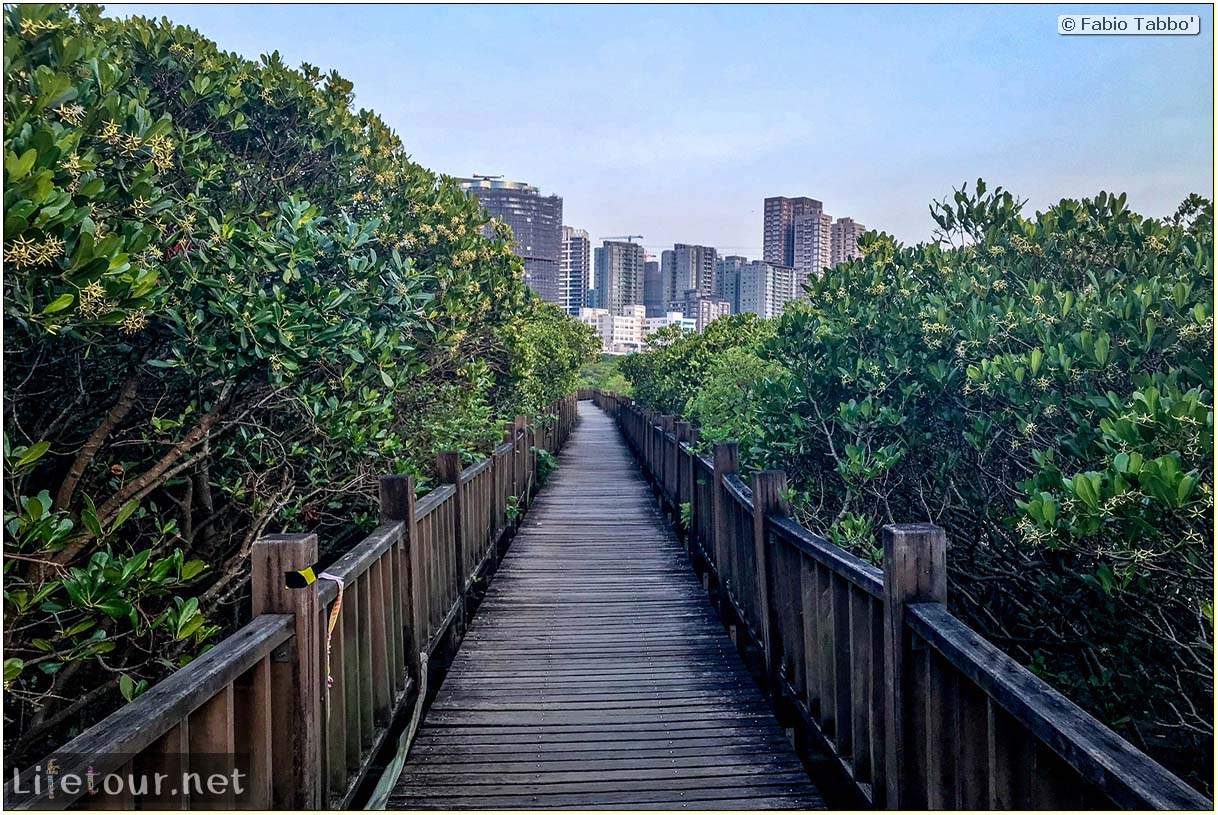 Taiwan 2018-New Taipei City-Hongshulin Mangrove Ecowalk-52