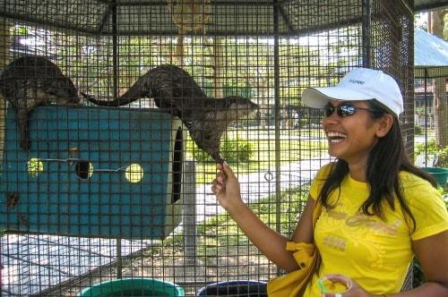 Thailand -Koh Samui-Laem Set-Tigers and birds show-15705 COVER